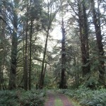Hunting in Cannon Beach's Forest Reserve?