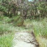 Where the Sidewalk Ends<p>by Shel Silverstein