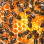 Here's to a thriving hive