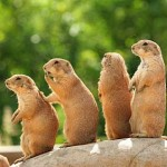 Prairie Dogs, Tunnels, and Politics; Welcome to My World
