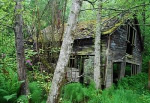 mossyhouse