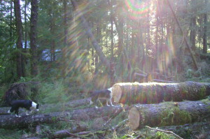 Storm-felled trees sawed to recover a trail with my home just 150 feet beyond. Photo by Gwendolyn Endicott.
