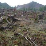 "ODF and Boise Cascade Agree: Clearcut is ""sustainable forestry"""
